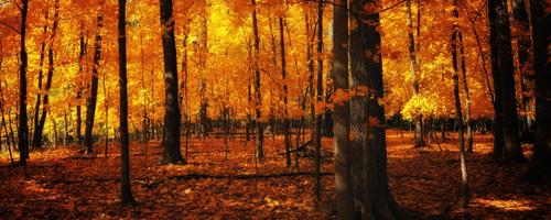 yellowforest